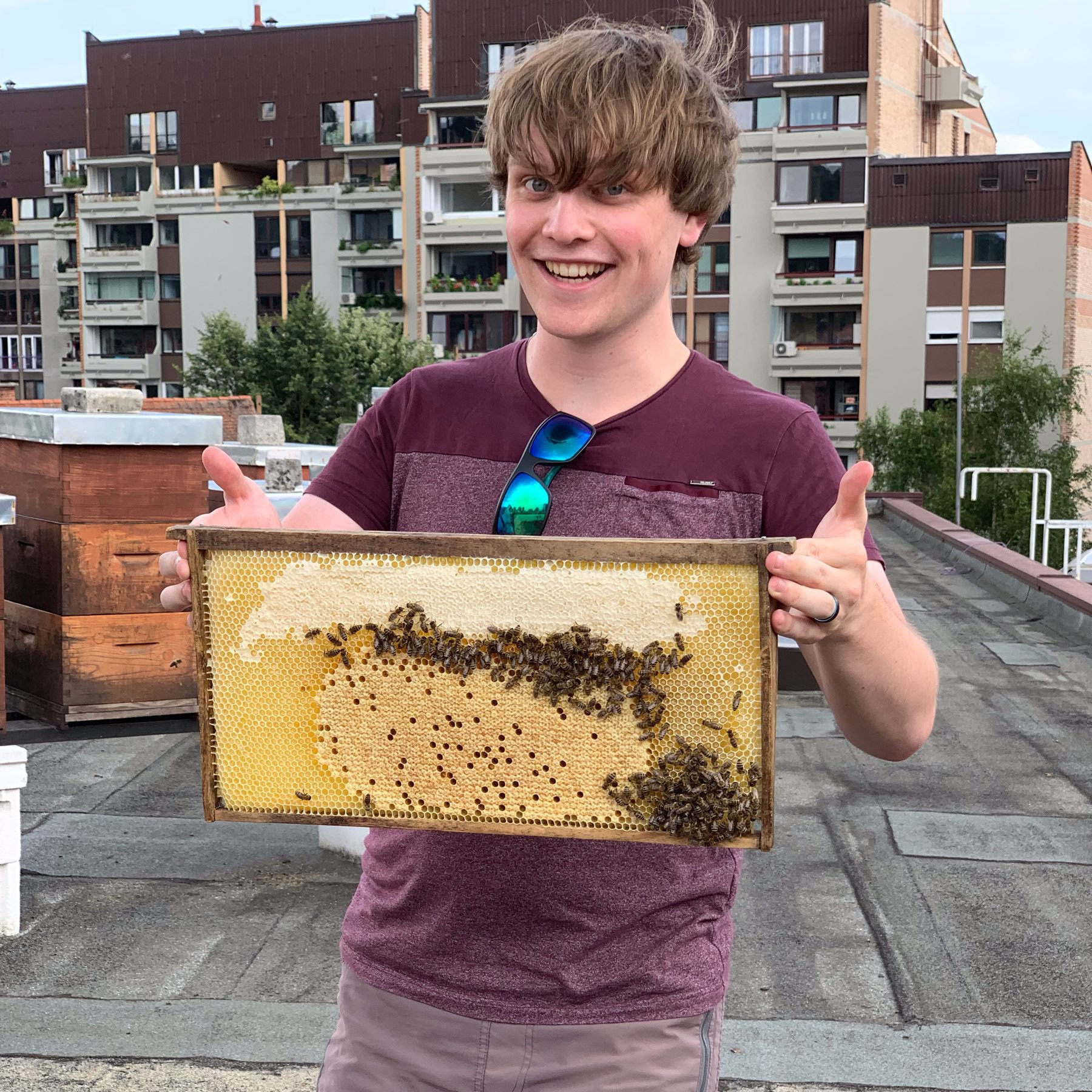 Mark holds a frame from an urban beehive in Ljubljana