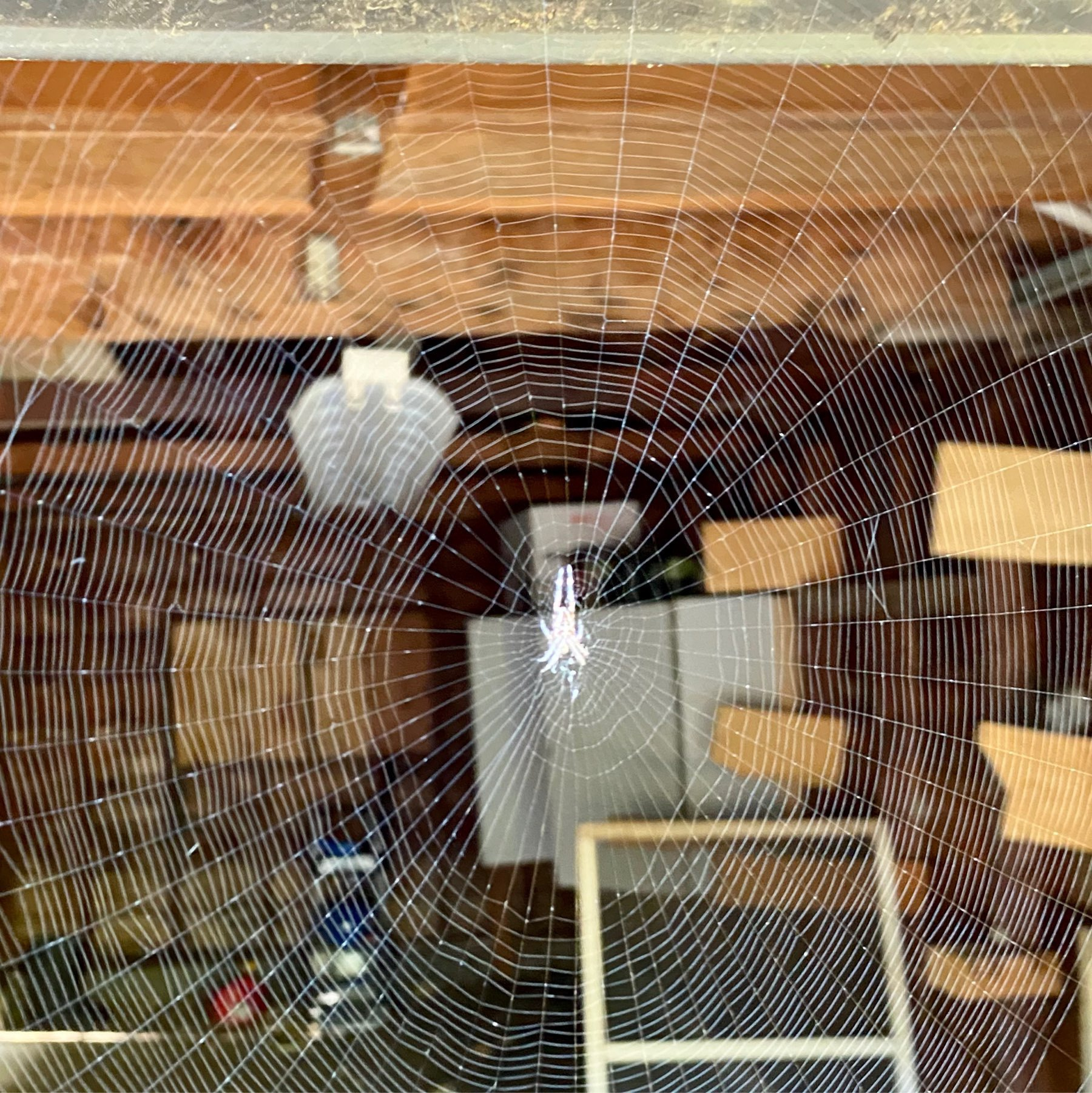 large spider web over the garage entrance