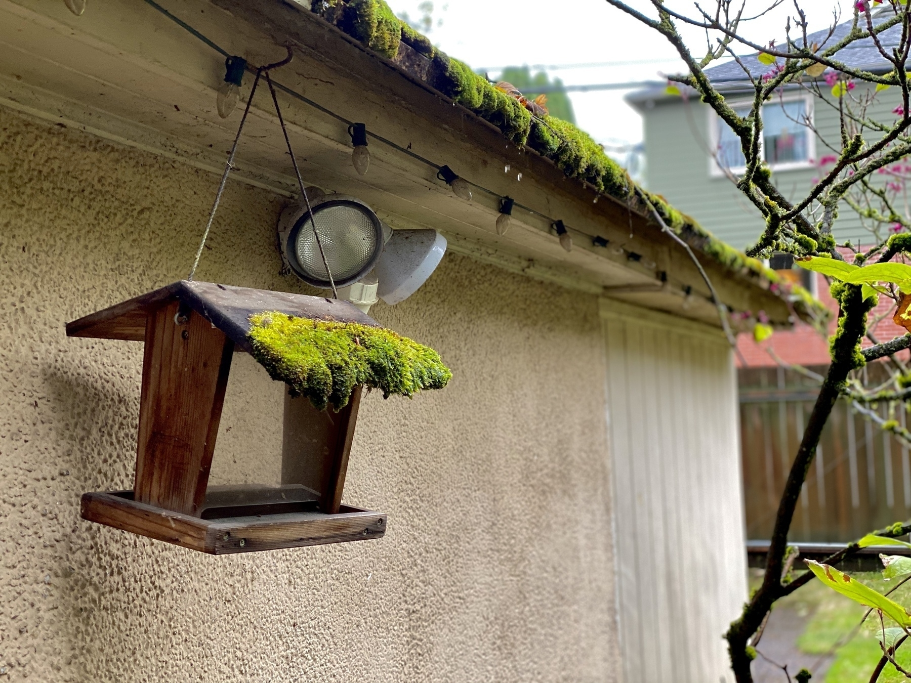 heavy moss on roof of bird feeder and garage, rain falling