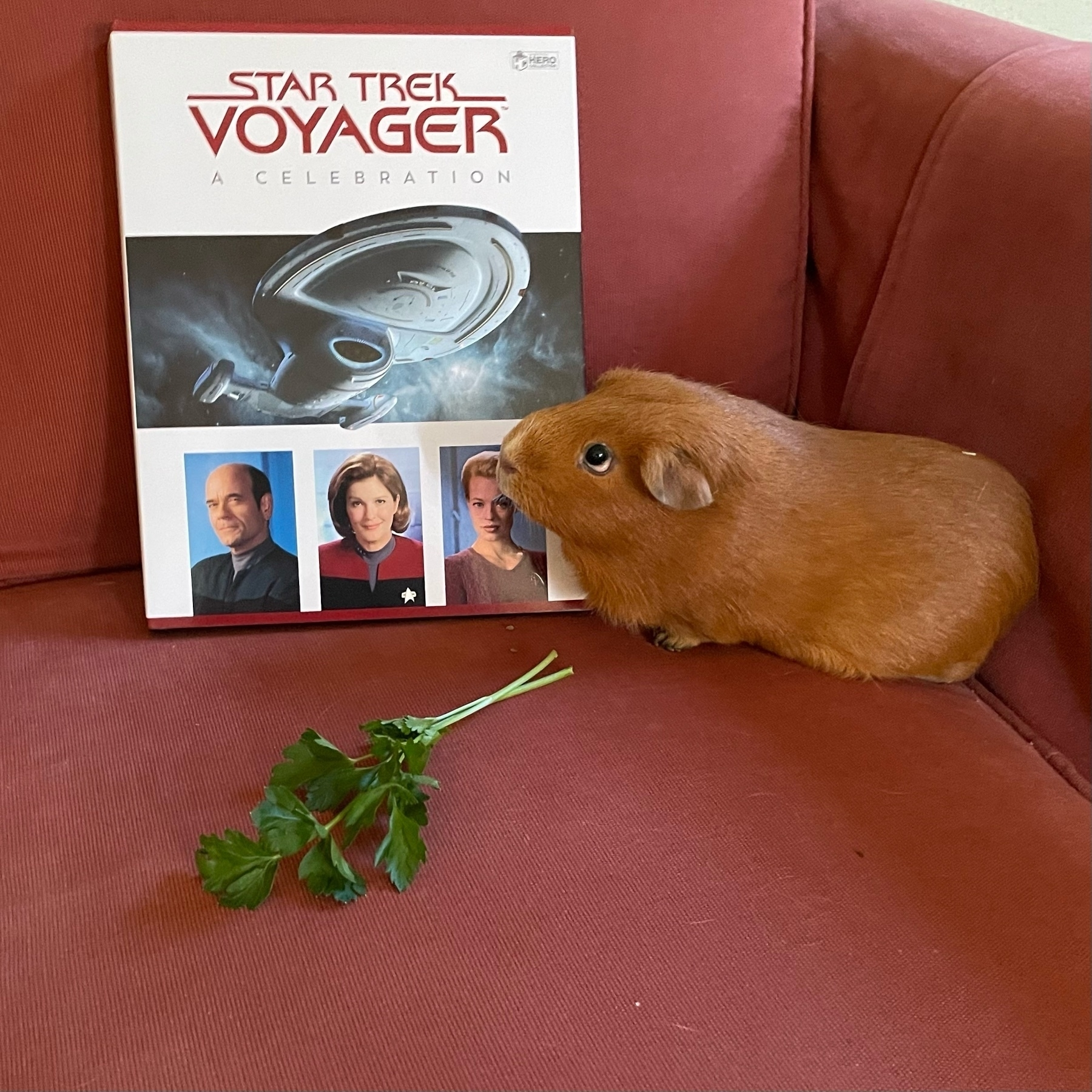 Grace the guinea pig with the new Star Trek Voyager compendium