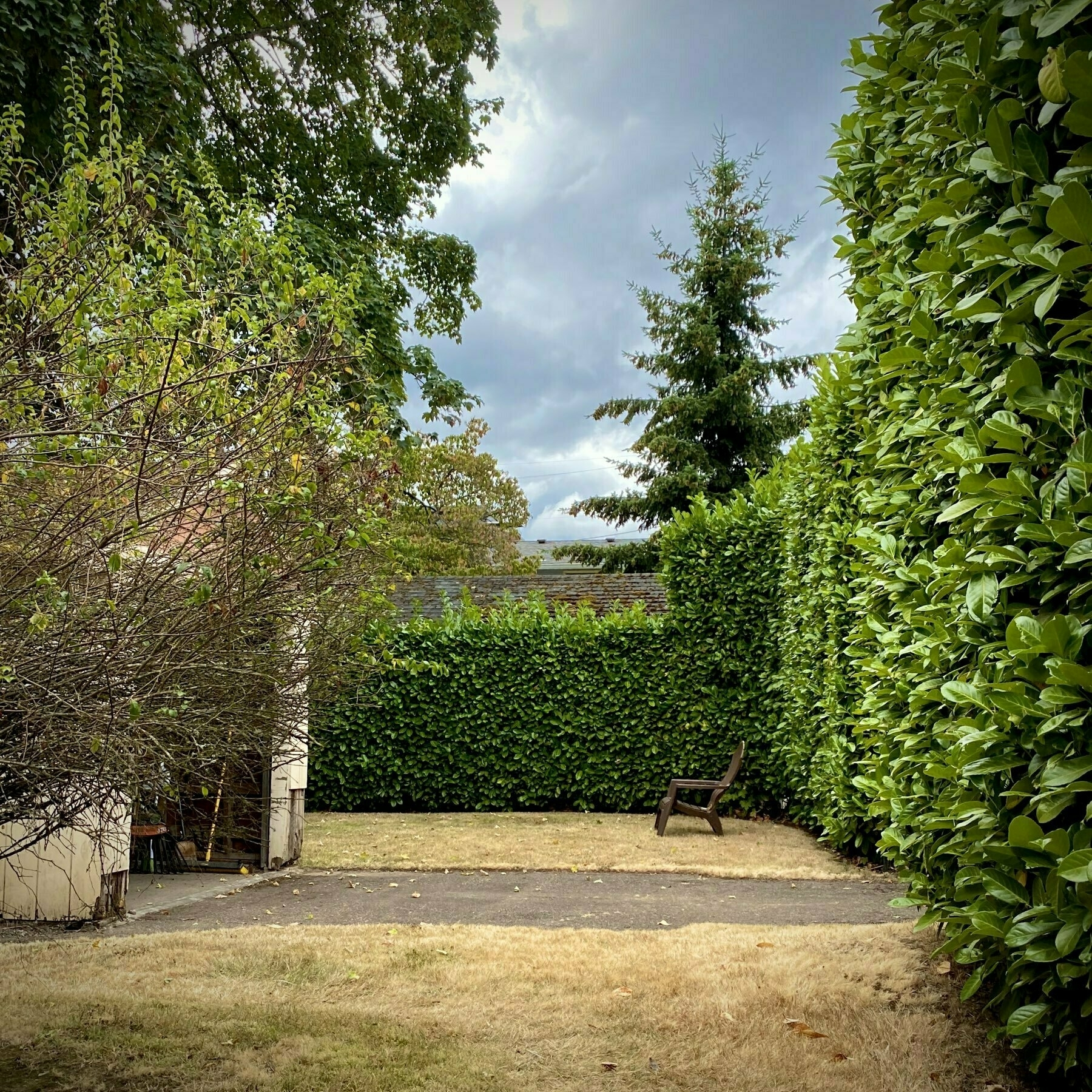 backyard view, trees and large hedge