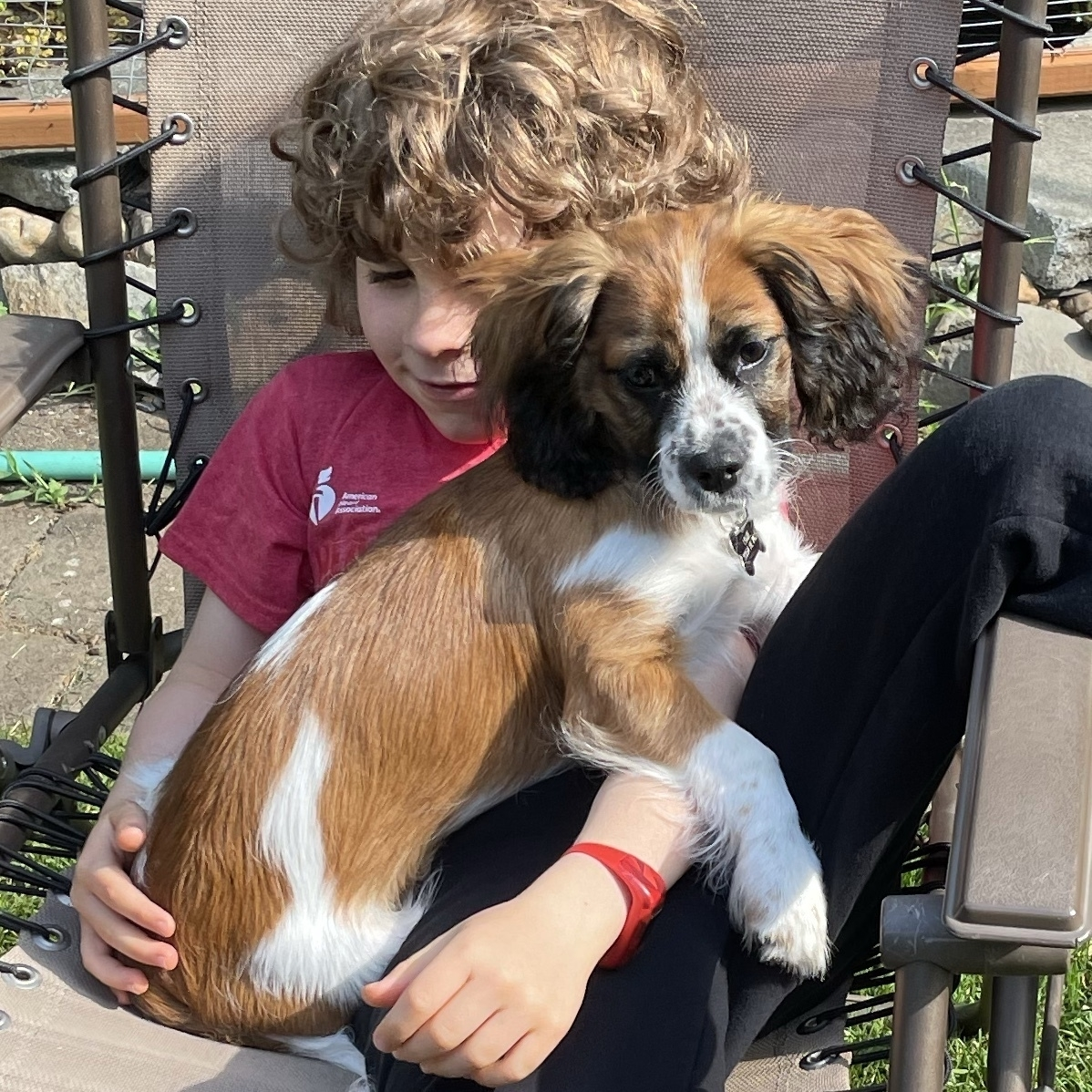 Young boy with a brown and white puppy on his lap.