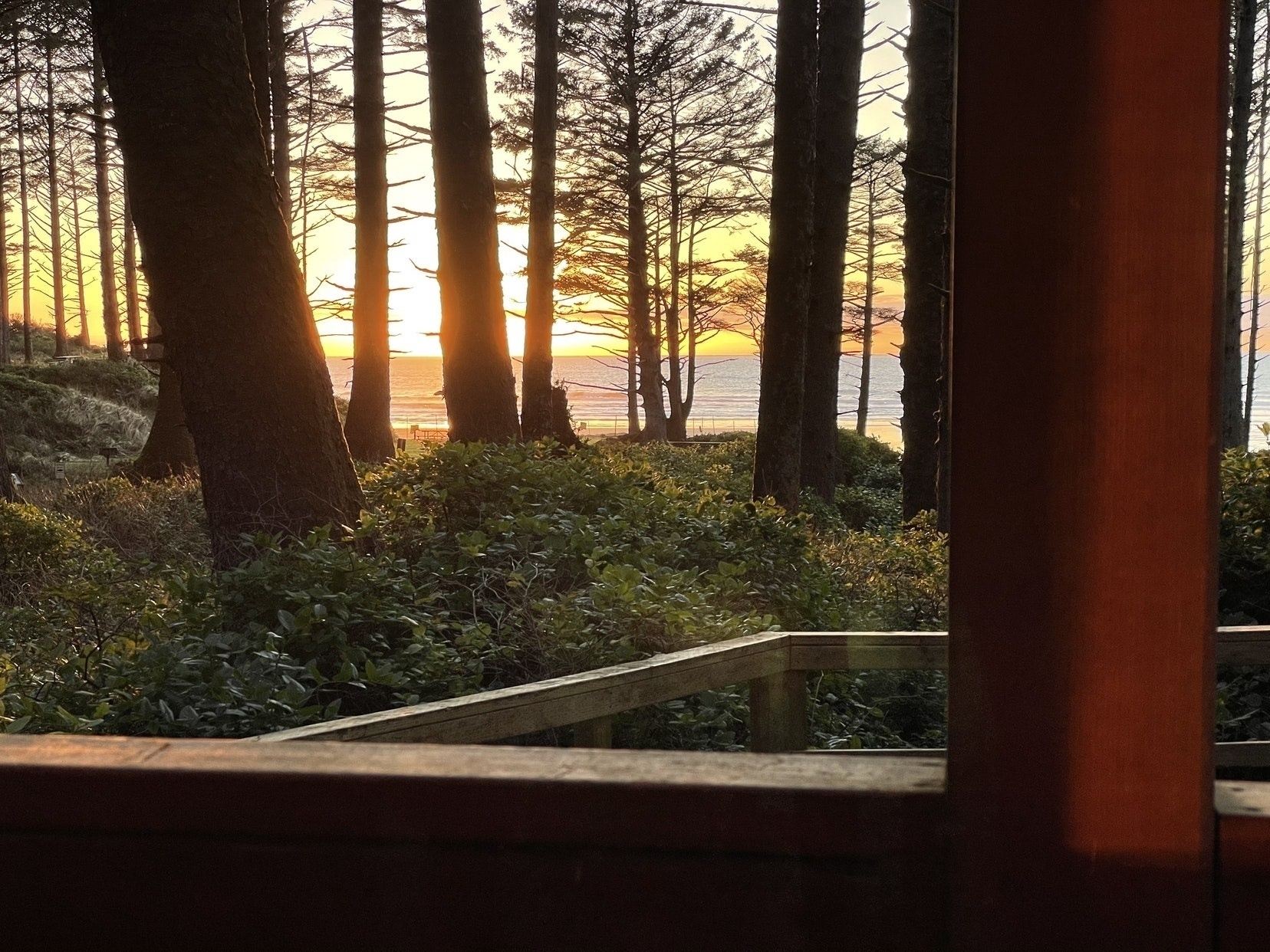 Sunset from the woods overlooking the Pacific Ocean.