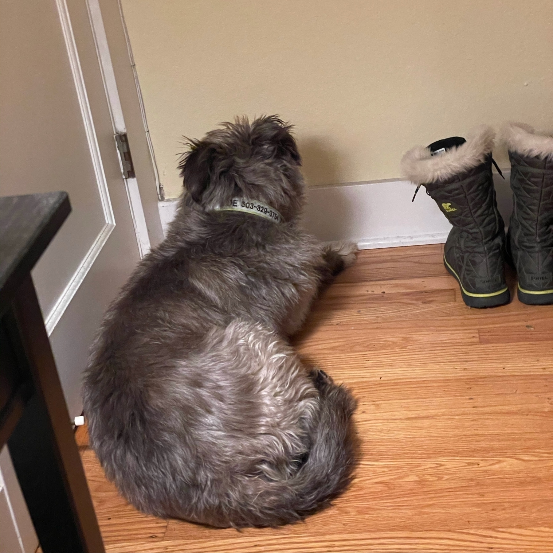 Dog sitting by the door, ready to escape.