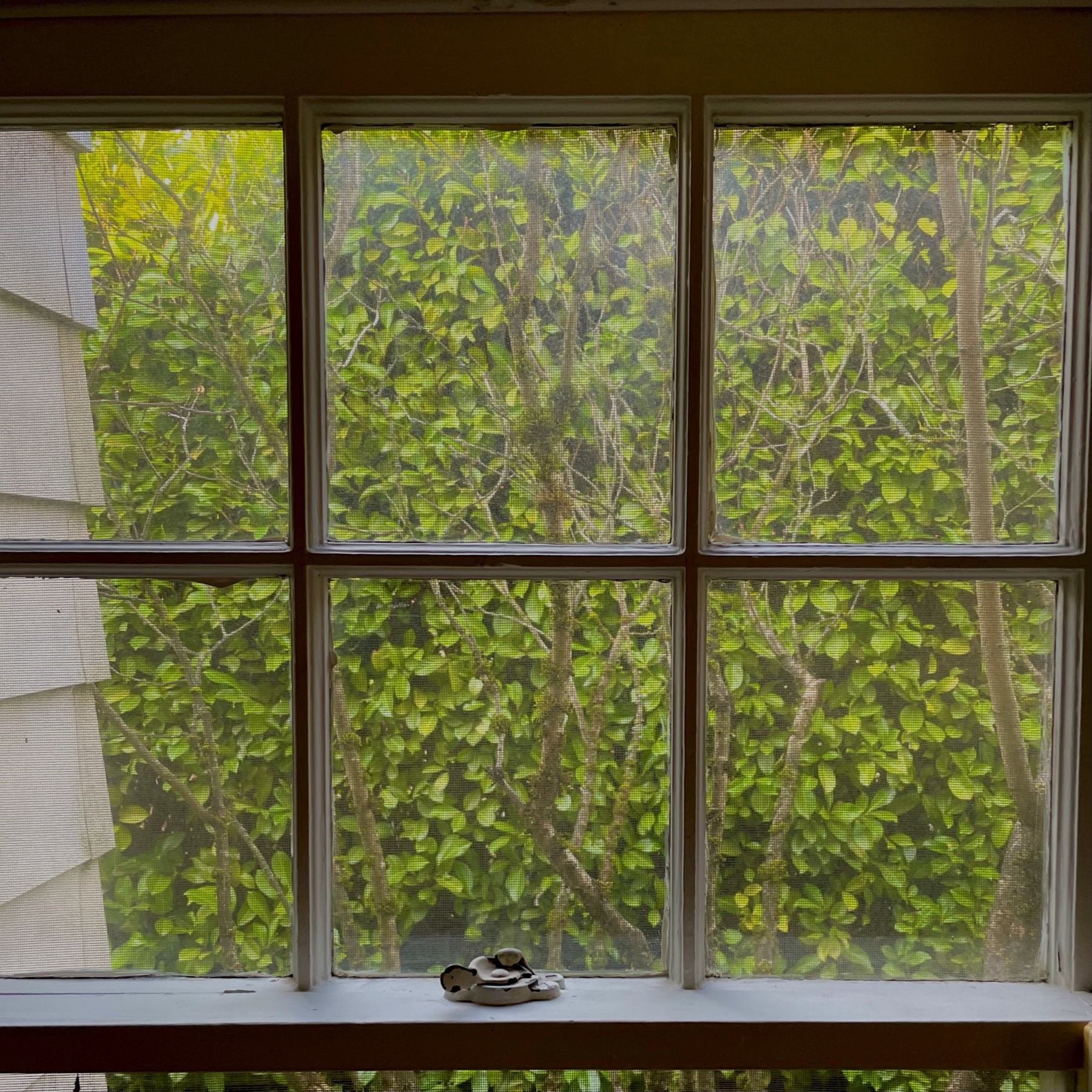 View of hedge fills the window